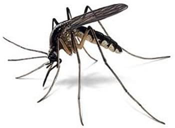 Mosquito Control Services For Victoria Texas