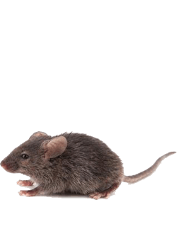 mouse problems in Victoria Texas